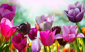 bigstock-Beautiful-spring-flowers-17487914
