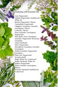 bigstock-Freshly-harvested-herbs-herbs-40825933